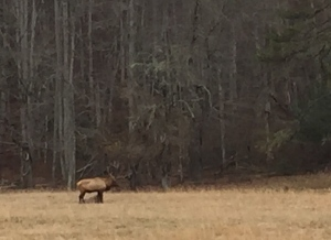 Yes, we really saw Elk on Our Trip!